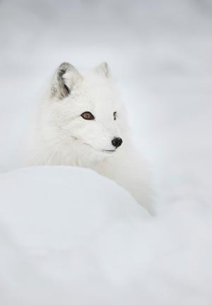 fakta_16-01-15_Fem-djur-med-vinterskrud_6