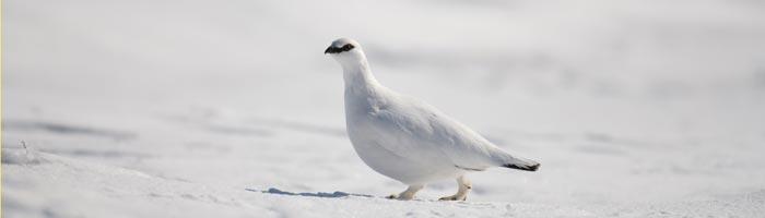 fakta_16-01-15_Fem-djur-med-vinterskrud_8