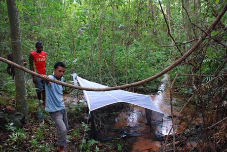 Insektsfällan som ser ut som ett tält heter Malaisefälla.