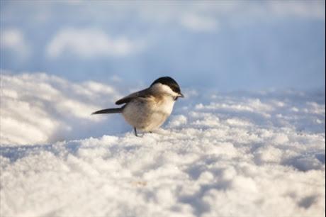 fakta-27-12-11_hjalp-djuren-i-vinter_2