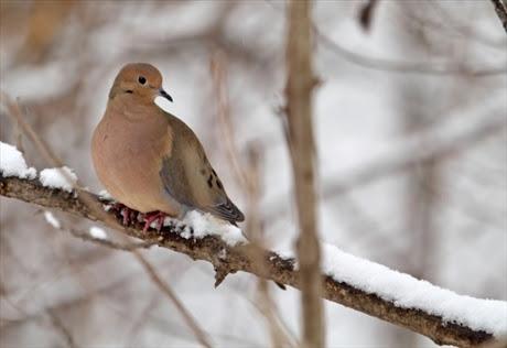 fakta-27-12-11_hjalp-djuren-i-vinter_3