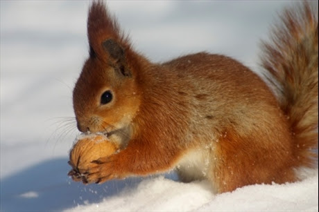 fakta-27-12-11_hjalp-djuren-i-vinter_6