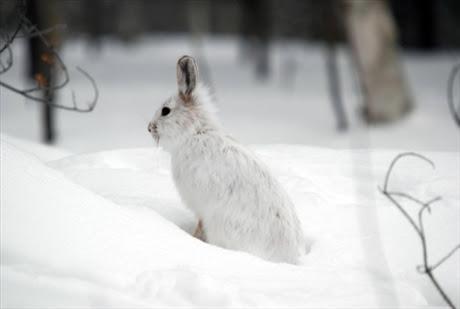 fakta-27-12-11_hjalp-djuren-i-vinter_7