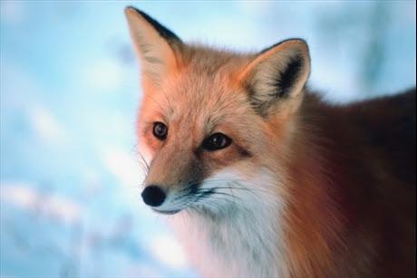 fakta-27-12-11_hjalp-djuren-i-vinter_8