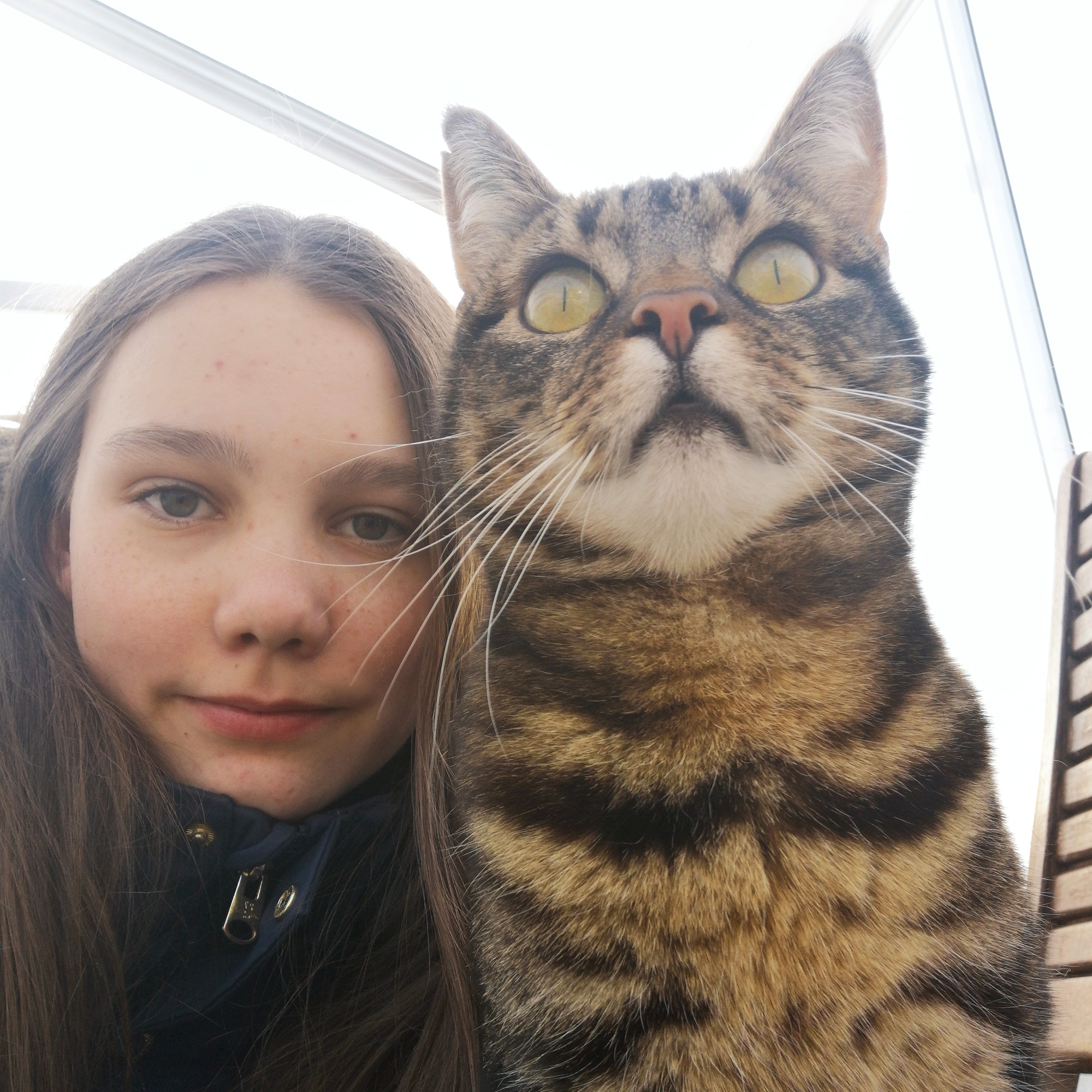 Husdjur_T_PelleGnilliot